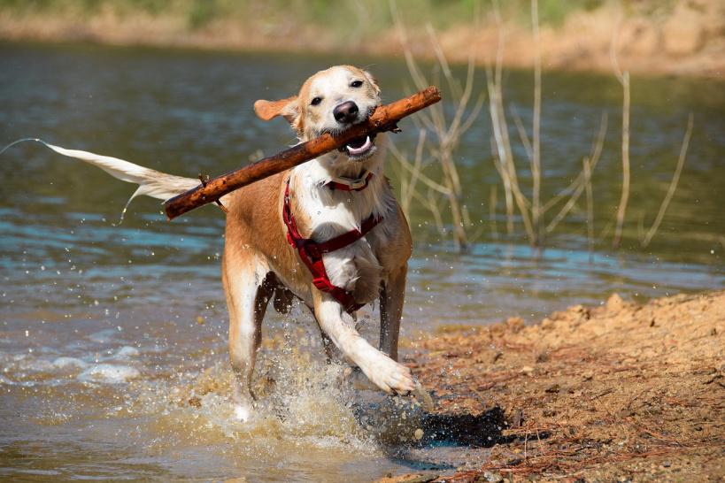 В Подмосковье вступили в силу штрафы за нарушения выгула собак